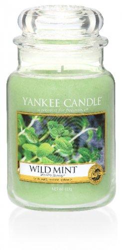 Yankee Candle Wild mint (4)